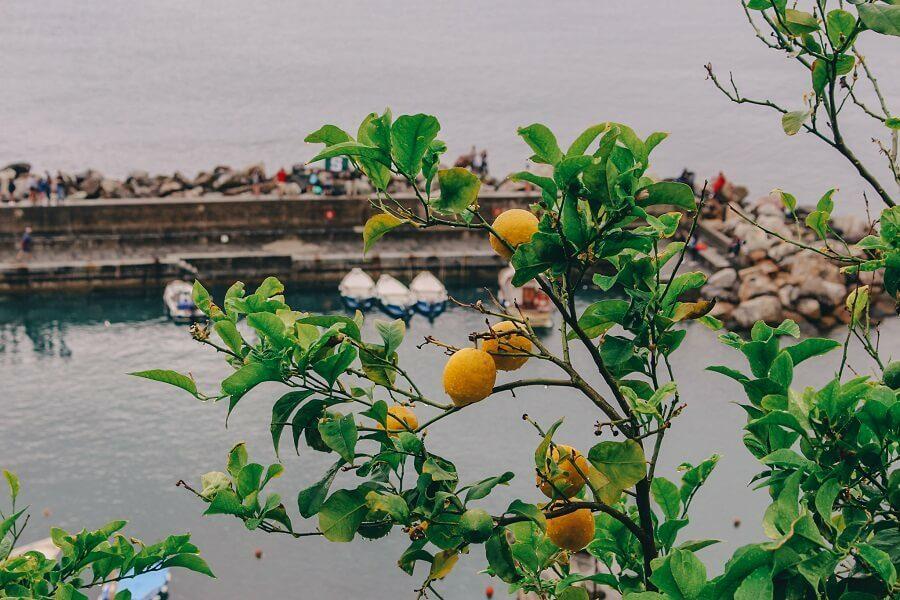 Limoni Vernazza | Come visitare le 5 terre e cosa vedere