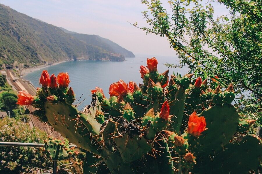 Panorama Corniglia